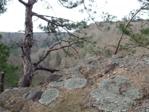 Anhaltinischer Saalstein